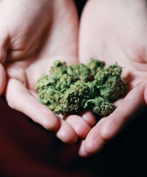 budbar-cannabis-on-hands